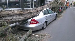 fallen-tree-1088514_1280
