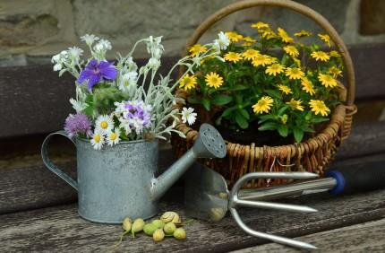 flowers-779317_1280